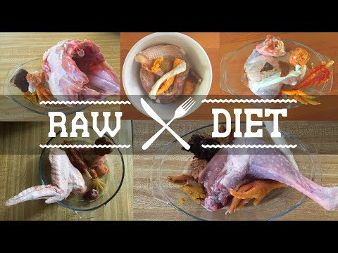 Close up Raw Feeding Dogs Compilation