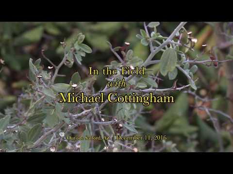 Red Root (Ceanothus fendleri)   Michael Cottingham