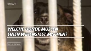 Wesenstest für Hunde