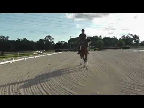 For Sale: Hank 14yo gelding by South Pacific