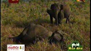 Wild Asia Sri lanka Rupavahini - Elephant Treatment