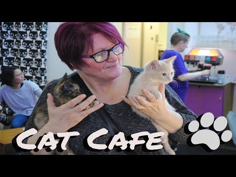 Purrple Cat Cafe Glasgow/Scotland 25/01/2018