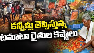 Tomato Farmers Suffer Huge Loss As Tomato Rate Falls | Special Focus | NTV