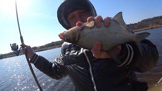 Мотыль червь или опарыш на что лучше клюёт Насадка для рыбалки Прикормка для рыбалки