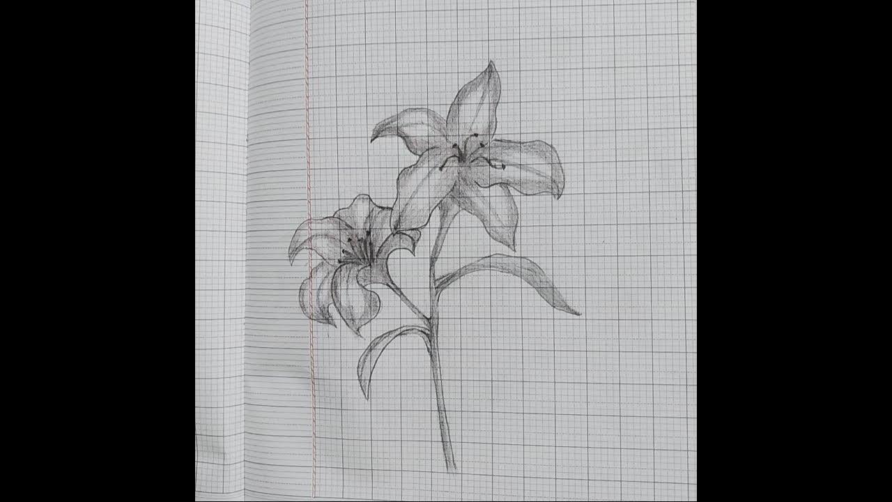 Vẽ bông hoa – hướng dẫn vẽ hoa ly bằng chì – How to draw flower