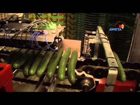 cucumber shrink wrap machine