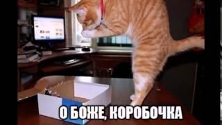 почему кошки любят коробки  why do cats like box