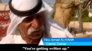 Kojak the Camel 3