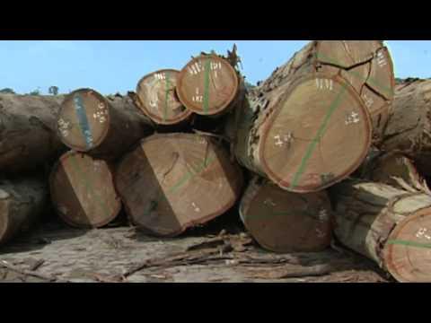 Somalia Famine Environment.m4v