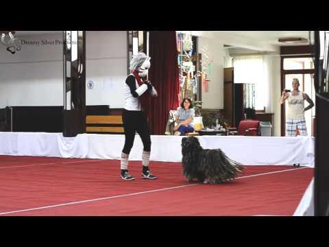II. Dog Dancing Hungarian Open és Országos Bajnokság