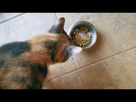 ✅  How To Use Science Diet Optimal Care Cat Food Review 🔴