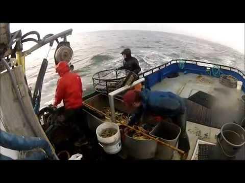 Crabbing Lady Nancy (Westport,Washington)