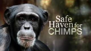Safe haven for chimps - Nature of things