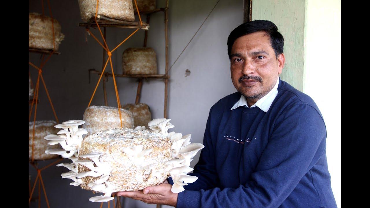 Success Story : How to get benefited by Mushroom Farming // Krishi Jagran//