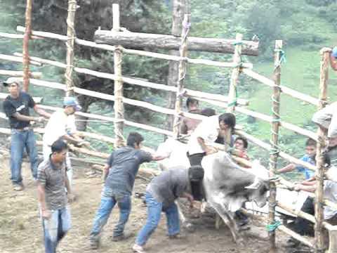 montan toro en yagila thumbnail