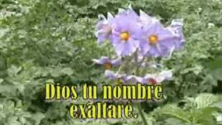 Dios Tu Nombre Exaltaré - Karaoke Adventista