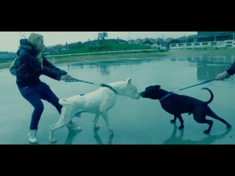 "LITTLE REGGAEMAN   ""CANS"" (videoclip)"