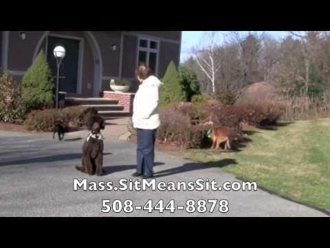 Boston, Massachusetts Dog Obedience Training - Board And Train