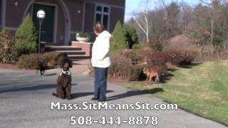 Boston, Massachusetts Dog Obedience Training - Board And Train