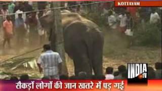 Kerala Aranmula Temple Elephant Turns Violent, Damages Cars