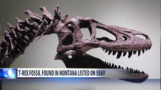 T  rex fossil found in Montana for sale on eBay angering scientists
