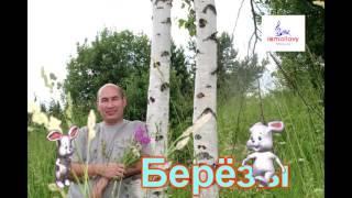 Исмоиловы Хасан и Хусен   Берёзы