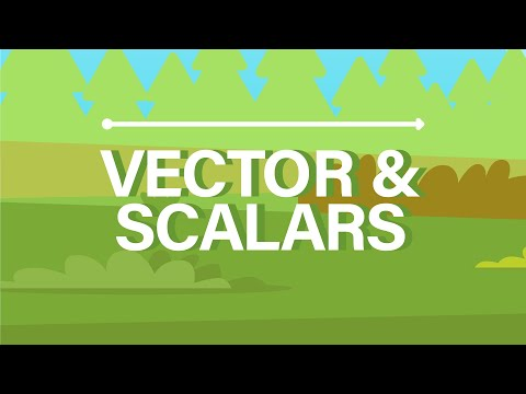 What are Vector and Scalar Quantities?