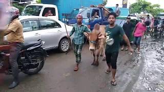 Gambar cover ভাই গরুর দাম কত?ক্রেতাদের কাছে শুনুন গরুর মূল্য| Sagorika cow market 2018