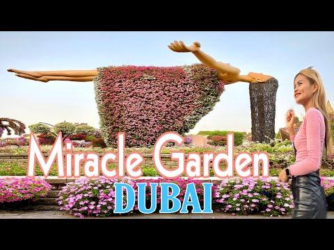 DUBAI MIRACLE GARDEN 2021|WORLD'S LARGEST NATURAL FLOWER | DUBAI 🇦🇪 Tourist Attraction
