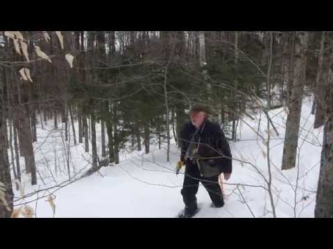 Berkshire Sweet Gold Maple Farm: Tapping 2015