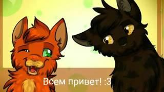 Мои ос из Котов-Воителей