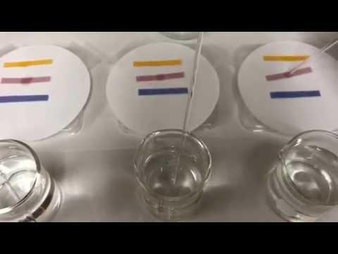 Litmus & pH Water Testing Basics