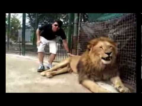 Tourists allowed to pet animals at Argentina's Lujan Zoo