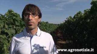 Grape quality agreement, con Syngenta vino di qualità per mercati accessibili