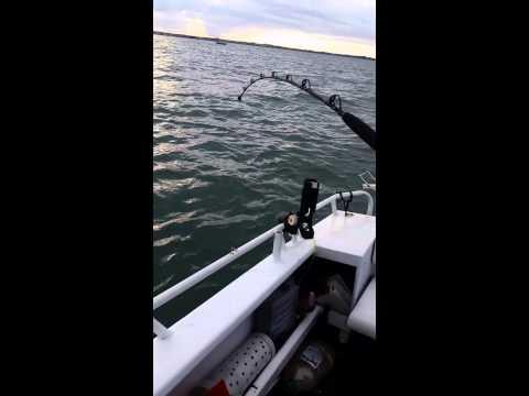Shark at peel island  part  1