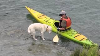 Dog in a kayak with dad Nov 2014