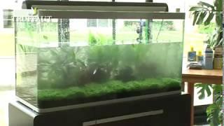 La mise en eau d'un aquarium : installation du sol - Jardinerie Truffaut TV