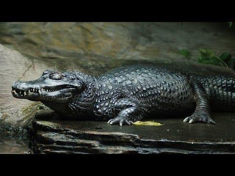 अमेजॉन जंगल के 5 सबसे खतरनाक जानवर | Top 5 Deadliest animals of amazon  : 3rd Episode