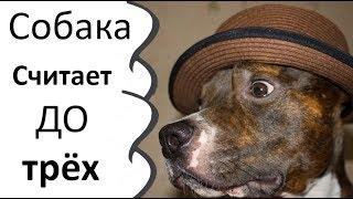 Собака считает до трех. 1 2 3 Мном