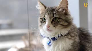Глазами животных #294. «Магия кошки» - Международная выставка, посвященная Дню защиты черных котов
