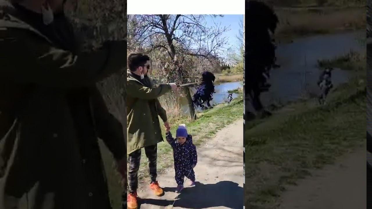«Как настоящая»: фальшивая собака для прогулок около дома ...