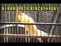 Suara Masteran Kenari Full Isian Blackthroat Heru Surobontoed Jogja  Mp3 - Mp4 Download