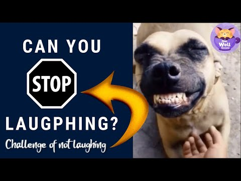 Try Not To Laugh or Grin While Watching Funny Animals Compilation😂Challenge of not laughing
