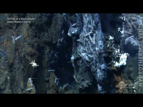 Hydrothermal vents in the deep sea