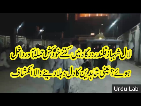 sehwan sharif bomb blast lal shahbaz qalandar blast ka inkshaf ● Urdu Lab Latest News 28