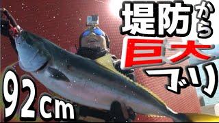 堤防からルアーで超巨大ブリが釣れた!ライトショアジギング thumbnail