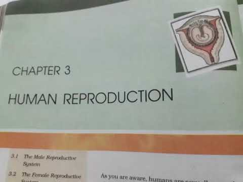 chapter 3 Human Reproduction class 12th ( NCERT READING ) thumbnail