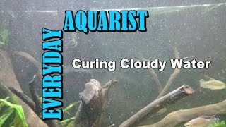 What Causes Cloudy White Aquarium Water