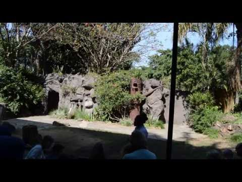 Umgeni River Bird Park Show
