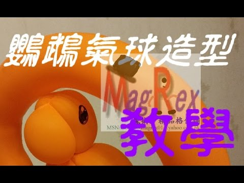 【MagRex扭氣球教學】 Hello Hello 我隻鸚鵡唔識講嘢!!!  扭氣球鸚鵡 Qualatex 長氣球 新手必學 氣球 Balloon Art (香港廣東話)課堂#009